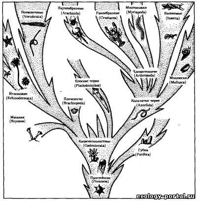 Основные типы животного