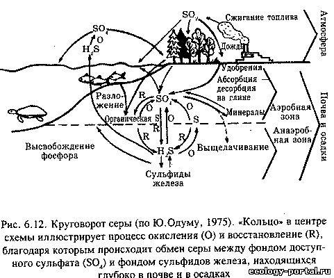 Биогеохимические циклы фосфора