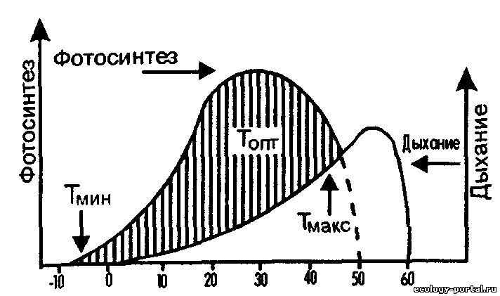 ustoychivost-spermatozoidov-vo-vneshney-srede