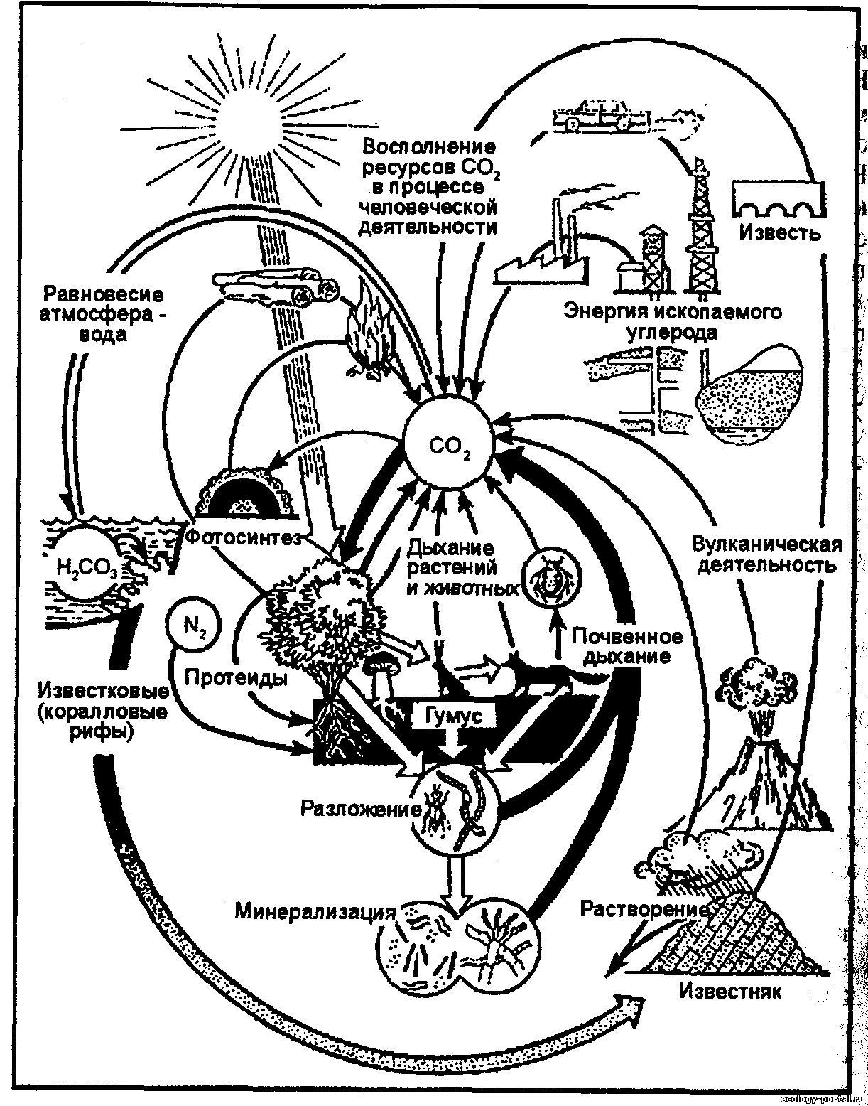 схема превращений азота в биотическом круговороте