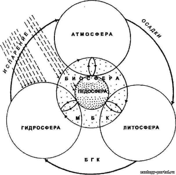 круговорот веществ в