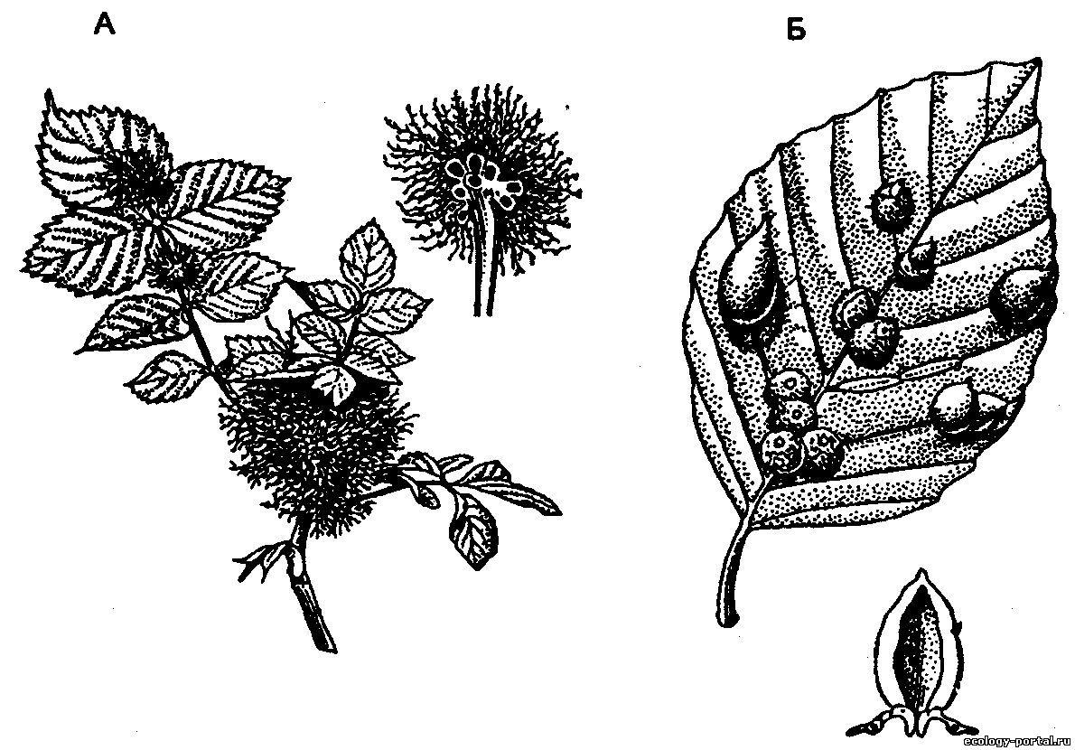 как определить наличие паразитов у человека